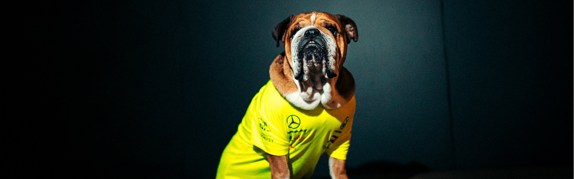 5 facts about Lewis Hamilton's beloved dog Roscoe!
